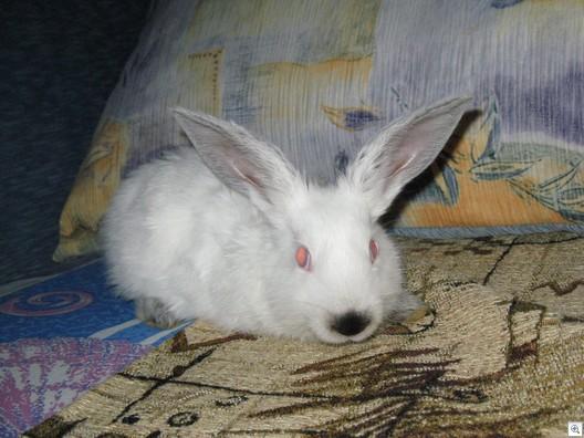 Bunnywabbit199