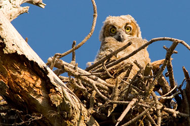 Owl2377